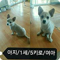 Adopt A Pet :: Aji - Oakton, VA