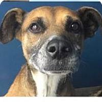 Adopt A Pet :: Outlaw - Springdale, AR
