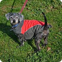 Adopt A Pet :: Matt - Akron, OH