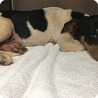 Adopt A Pet :: Zander - Jacksonville, TX