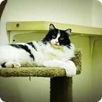 Adopt A Pet :: Dolly - Casa Grande, AZ