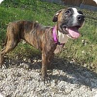 Adopt A Pet :: Radiance - Von Ormy, TX