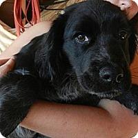 Adopt A Pet :: Jacob - South Jersey, NJ