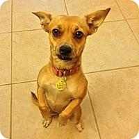 Adopt A Pet :: Wendy - Rescue, CA