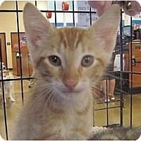Adopt A Pet :: Airhead - The Colony, TX