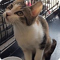 Adopt A Pet :: Sweetie - Santa Monica, CA