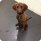 Adopt A Pet :: Debra Messing