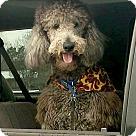 Adopt A Pet :: *Winston - PENDING