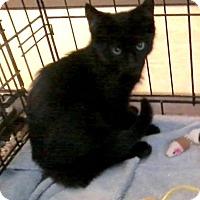 Adopt A Pet :: Farina - East Brunswick, NJ