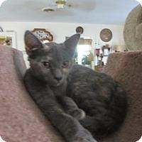 Adopt A Pet :: Lola - Colonial Beach, VA