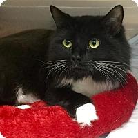 Adopt A Pet :: Paige - Webster, MA