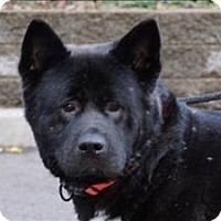 Adopt A Pet :: Bretta Xeno - Portland, OR