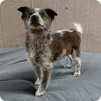 Adopt A Pet :: Kourtney Adoption pending - Manchester, CT