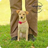 Adopt A Pet :: Blair - Pearland, TX