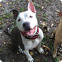 Adopt A Pet :: Layla - Ft. Myers, FL