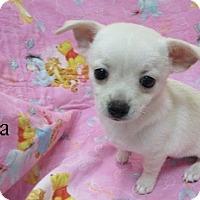 Adopt A Pet :: Sasha - Bartonsville, PA
