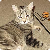 Adopt A Pet :: Aunt Bea - Toronto, ON