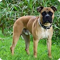 Adopt A Pet :: Outlaw - Batavia, OH