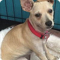 Adopt A Pet :: Gretel - Thousand Oaks, CA