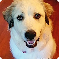 Adopt A Pet :: Purdy - new! - Beacon, NY