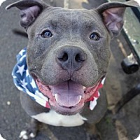 Adopt A Pet :: Alpo - Manhattan, NY