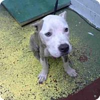 Adopt A Pet :: KANE - Atlanta, GA