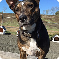 Adopt A Pet :: Abby - Newtown, CT