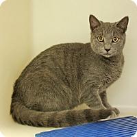 Adopt A Pet :: Pluto - Harrisonburg, VA