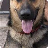 Adopt A Pet :: Gunnar - Duluth, MN