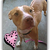 American Pit Bull Terrier Mix Dog for adoption in Des Moines, Iowa - Sassy