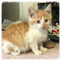 Adopt A Pet :: Leddie - Los Alamitos, CA