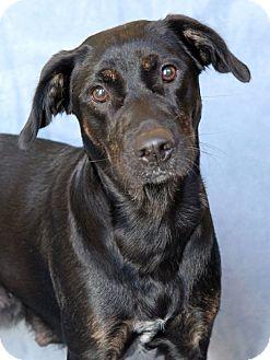 Australian Shepherd Mix Dog for adoption in Encinitas, California - Mabel