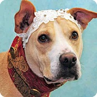 Adopt A Pet :: BUTTERCUP - Louisville, KY
