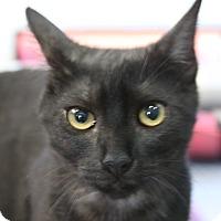 Adopt A Pet :: Cee Cee - Sarasota, FL