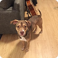Adopt A Pet :: Dakota - Cincinnati, OH