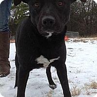 Adopt A Pet :: Macie - Albany, NY