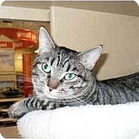 Adopt A Pet :: Sera - Colmar, PA