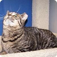 Adopt A Pet :: Tobin - Colorado Springs, CO