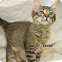 Adopt A Pet :: Kendal - Sacramento, CA