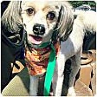 Adopt A Pet :: Harley - San Antonio, TX