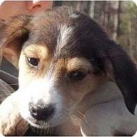 Adopt A Pet :: Dunken - Allentown, PA