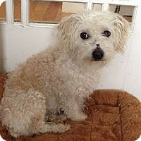 Adopt A Pet :: Raina - San Francisco, CA