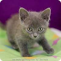 Adopt A Pet :: Jade - Fountain Hills, AZ