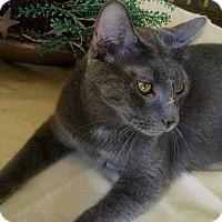 Adopt A Pet :: Buckeye - Carlisle, PA