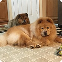Adopt A Pet :: BISCUIT - Dix Hills, NY