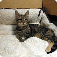 Adopt A Pet :: Jojo - Riverside, CA