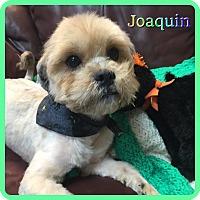 Adopt A Pet :: Joaquin - Hollywood, FL