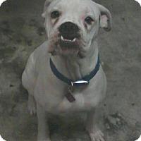 Adopt A Pet :: (CL) Buddy - Brentwood, TN