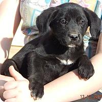 Adopt A Pet :: Flicka (6 lb) - SUSSEX, NJ