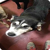 Adopt A Pet :: JANET - Atlanta, GA
